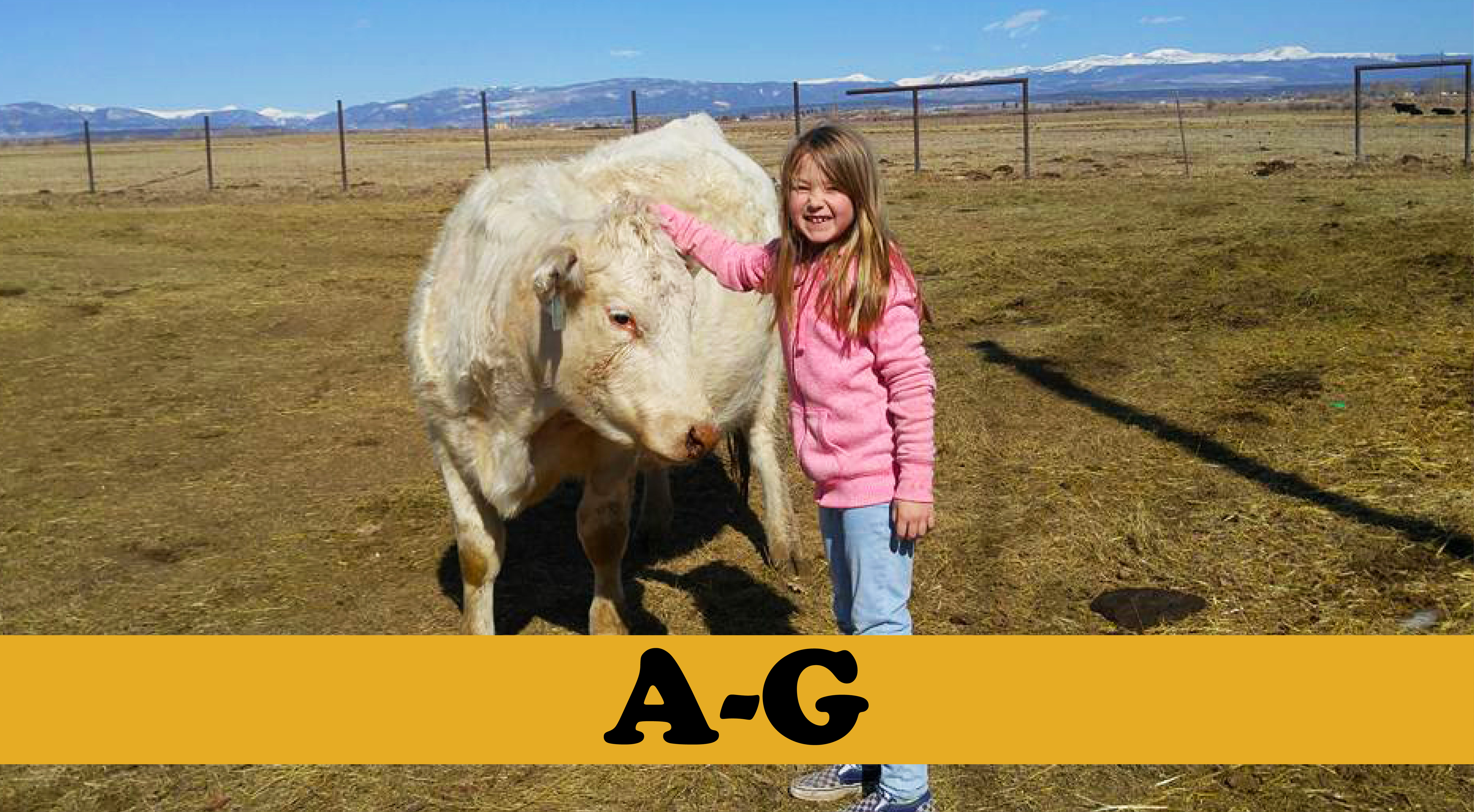 photo of small girl and Charolais cow